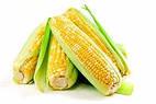 Семена кукурузы НК Фалькон