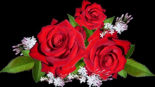 Саджанці Троянди
