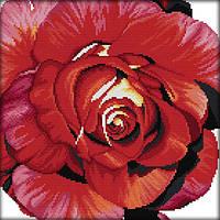 Набір для вишивання хрестом 33х33 Троянда Joy Sunday H383, фото 1
