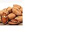 Саджанці Волоського горіха Кочерженко (2 річний) - раннього терміну, фото 3