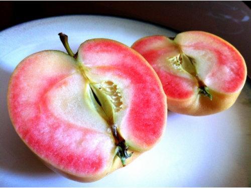 Саджанці Яблуні Пінк Перл (Pink Pearl) - красномясая, річна
