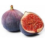 Саженцы инжира Фиолетовый (Purple) - средний, самоплодный, сладкий, фото 2