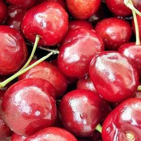 Саженцы вишни Игрушка - раннего срока, урожайная, морозостойкая