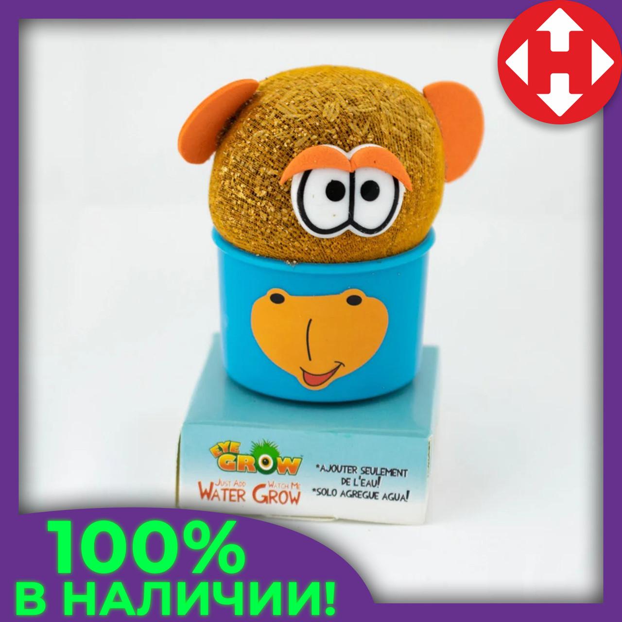 Распродажа! Травянчик декоративный в синем горшочке, растущая игрушка трава, с доставкой по Киеву и Украине