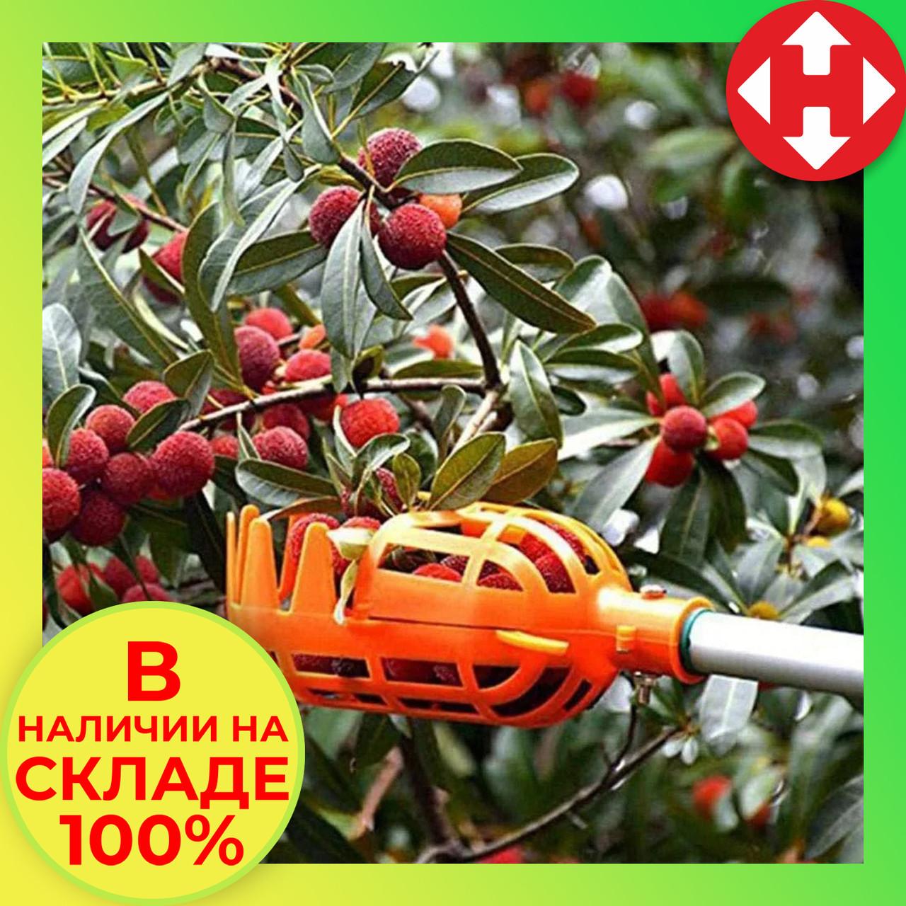 Плодосъемник для сбора фруктов и ягод, плодосборник яблок и пр., оранжевый