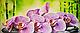 Декоративная Настенная Панель ПВХ GRACE (Орхидея Ванда), фото 2