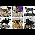 Фурминатор c кнопкою для маленьких короткошерстих собак FURminator short Hair Small Dog 4.5 см NX, фото 2