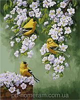 Картина по номерам Menglei Птицы на яблоне КН2427 40 х 50 см, фото 1