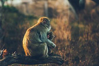 Батьківство на основі теорії прив'язаності створює дитину-липучку?