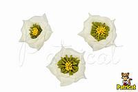 Роза кремовая с желто-оливковыми тычинками из фоамирана, диаметр 3 см 10 шт/уп, фото 1
