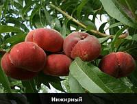 """Персик инжирный """"Крымский плоский"""""""