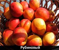 """Саженцы нектарина """"Рубиновый 7"""""""