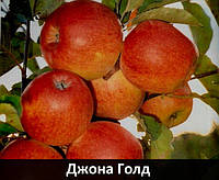 "Саженцы яблони ""Джона Голд"""