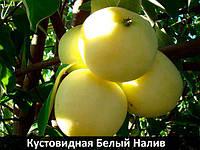 Яблоня куставая Белый налив