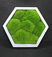 Мох в сотах, Плитка со мхом, стабилизированный мох, 28см , мох на стены, Кочки, Мох