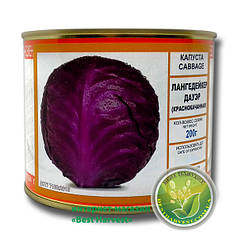 Семена капусты «Лангедейкер Дауер» краснокачанная 200 г, инкрустированные (Vitas)
