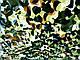 Сетка маскировочная затеняющая MTP , CE 3х6м пленка, фото 2