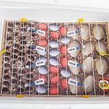 Инкубатор механический Теплуша ИБ 100 Тэновый с влагомером, фото 8