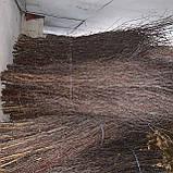 Веник березовый,метла, фото 3