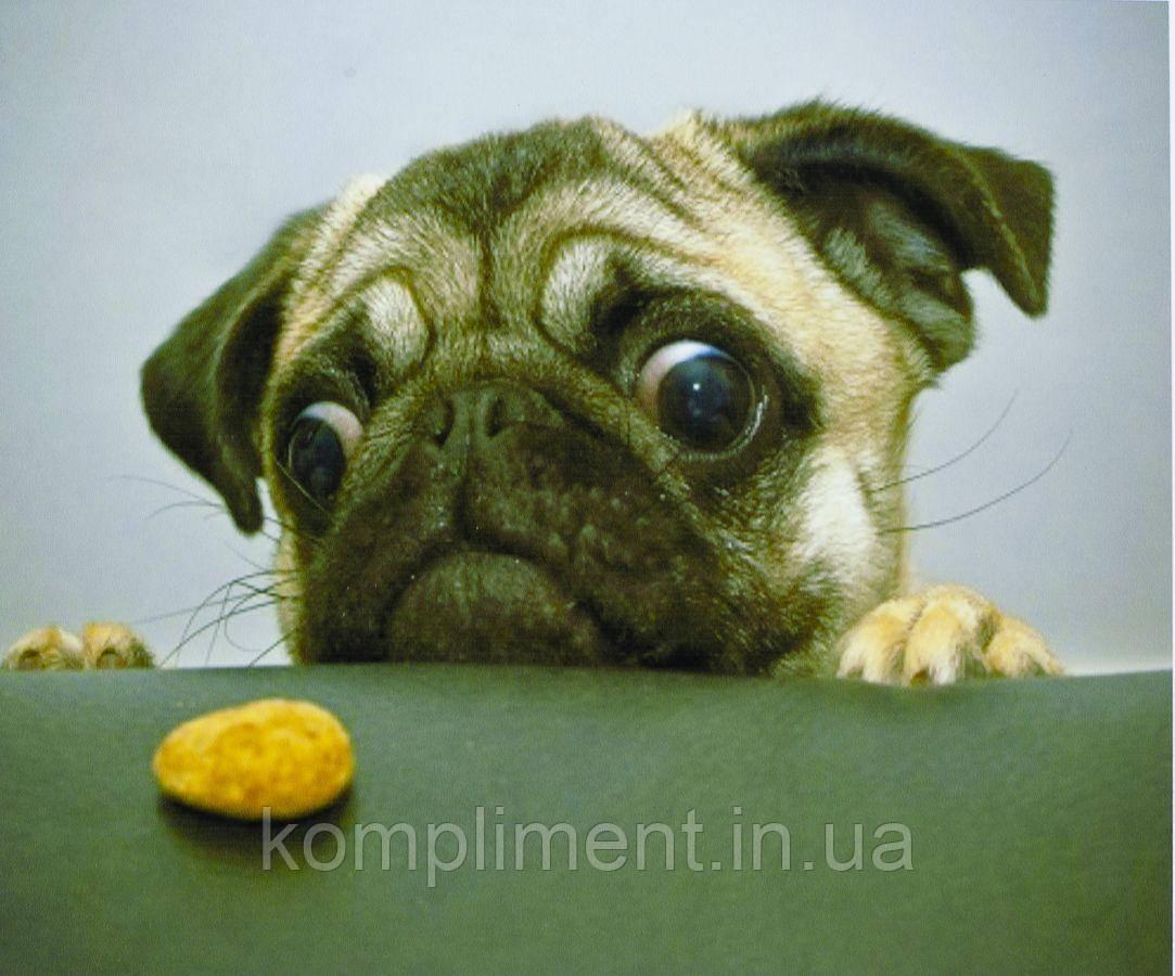 """Картина по номерам  """"Мопс и печенье"""" 40*50 см, краски - акрил"""