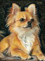 Алмазная мозаика Чихуахуа DM-340 30х40см Полная зашивка. Набор алмазной вышивки животные собаки