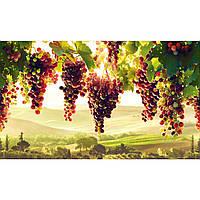 Стінні декоративні пластикові панелі ПВХ Грейс (Grace) - ВИНОГРАДНИК (602х1002 мм)