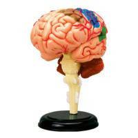 Пазл 4D Master Мозг человека (26056)
