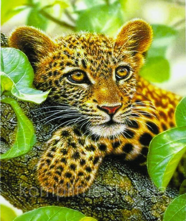 """Картина по номерам  """"Ягуар"""" 40*50 см, краски - акрил"""