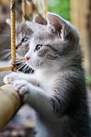 Настенный инфракрасный обогреватель-картина Котята, с доставкой по Украине Трио 00104, фото 1