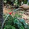 Подвесной душ для кемпинга и дачи 20л, Camp Shower, резиновый душ пакет для туризма, черный, с лейкой, фото 7