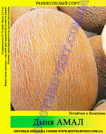 Семена дыни «Амал» 100 г, фото 2