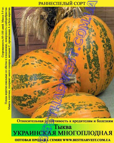 Семена тыквы Украинская многоплодная 0.5 кг