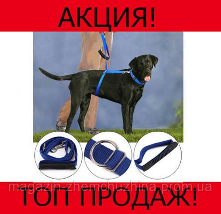 Поводок для собак The Instant Trainer Leash!Хит цена, фото 2