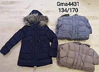 Курточка на хутрі для дівчаток Glo-Story оптом, 134/140-170 рр.Артикул:GMA4431