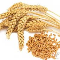 Гидролизованные протеины пшеницы