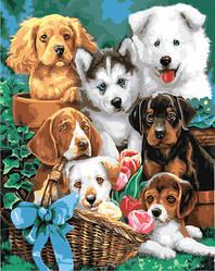 """Картина по номерам """"Щенячий коллаж"""" Сложность: 3 (щенки, собаки, собачки, много щенков)"""