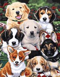 """Картина по номерам """"Щенята"""" Сложность: 3 (щенки, собаки, собачки, много щенков)"""