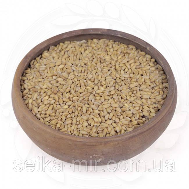 """Пшеница озимая """"Белокурая"""" 0,25кг."""