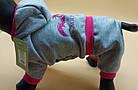 Комбинезон для собак дракоша девочка,  XS/ 25 см, фото 2