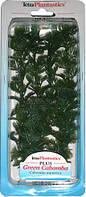 Растение для аквариума Tetra CABOMBA (Кабомба) 30 см