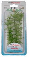 Растение для аквариума Tetra AMBULIA (Амбулия) 30 см
