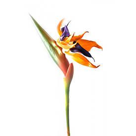 """Квітка """"Стреліція"""" (92 см)"""