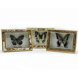"""Метелик в рамці (15х11 см)(5"""")"""