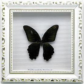 Метелик в рамці (21х21х4 см)