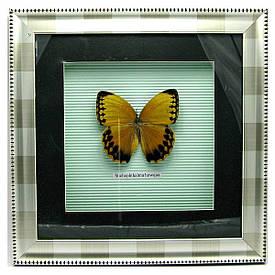 Метелик в рамці (30х30 см)