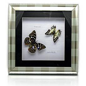 Метелики в металевій рамці (30х30х4 см)