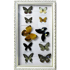 Метелики в рамці (10 шт)(50,5х30,5 см)