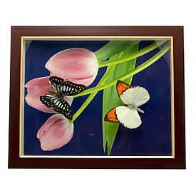 Метелики в рамці (28х23х2,5 см)