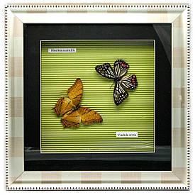 Метелики в рамці (30х30х3,5 см)