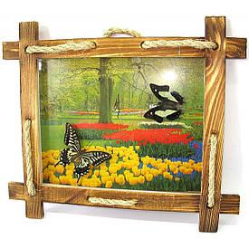 """Метелики в рамці на тлі (2шт.)(28х23 см)(10"""")"""